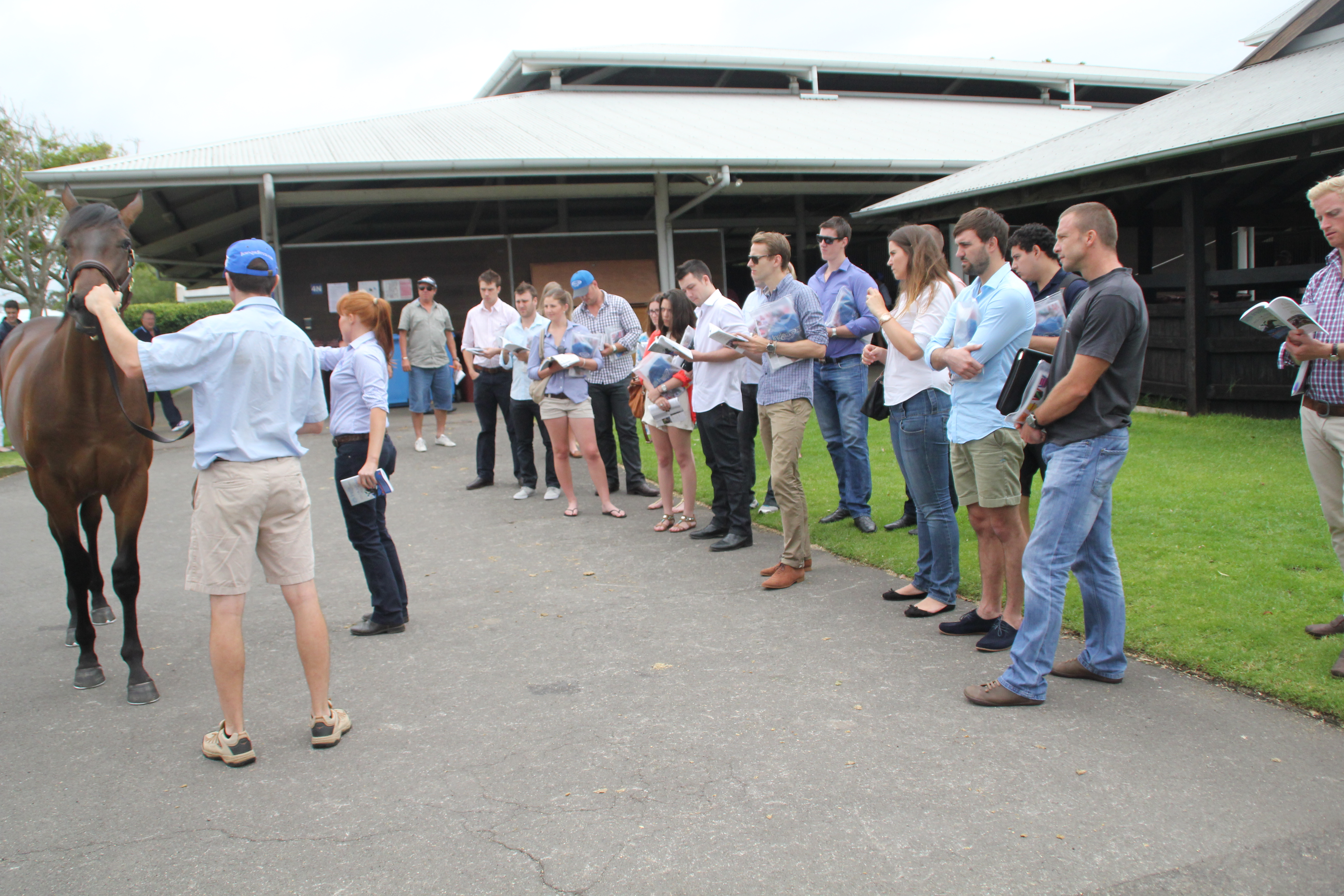 Media Release: YPR get first-class experience at 2013 Inglis Sydney Classic Yearling Sale